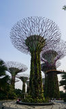 Supertree Grove at Gardens by the Bay Royalty Free Stock Images