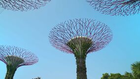 Supertree Grove in the Gardens by the Bay Singapore