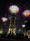 Supertree Grove in Gardens by the Bay Royalty Free Stock Images