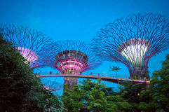 Supertree grove at night in Gardens by the Bay Singapore Royalty Free Stock Photos
