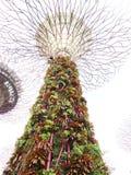 Supertree Grove stock photo