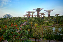 The Supertree Grove. SINGAPORE-JUN 16: Day view of The Supertree Grove at Gardens by the Bay on Jun 16, 2013 in Singapore. Spanning 101 hectares, and five-minute Royalty Free Stock Photos