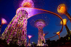 The Supertree Grove. SINGAPORE-JUN 16: Night view of The Supertree Grove at Gardens by the Bay on June 06, 2013 in Singapore. Spanning 101 hectares, and five Stock Photos