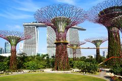 Supertree Grove, Singapore Stock Images