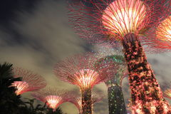 Supertree Grove Singapore Royalty Free Stock Image