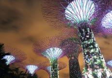 Supertree Grove Singapore Royalty Free Stock Photo