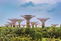 Supertrees, Supertree Grove at Gardens by the Bay in Singapore. stock photography