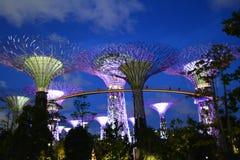 Supertree (ljus) Arkivfoto