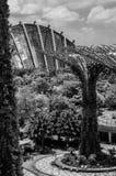 Supertree och växthus på trädgården vid fjärden Singapore arkivfoto
