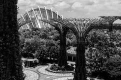 Supertree och växthus på trädgården vid fjärden Singapore arkivbild