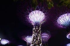 Supertree ogród przy nocą, ogród zatoką, Singapur fotografia stock