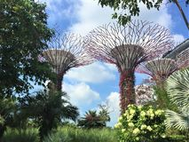 Supertree`s Gardens by the Bay Singapore stock photography