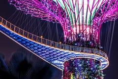 Supertree Singapore natt Fotografering för Bildbyråer