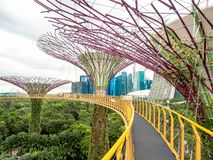 Supertree, Singapore - Nov 27, 2018: Tourists walking in the Supetree Grove area at the Gardens by the Bay in Singapore near. Marina Bay Sands hotel at summer royalty free stock image