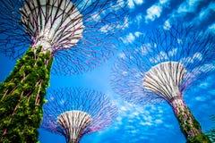 Supertreebosje Singapore - Blauwe bewolkte hemel royalty-vrije stock foto
