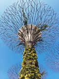 Supertreebosje, Tuinen door de baai Singapore stock foto's