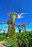 Supertreebosje, Tuinen door de Baai, Singapore royalty-vrije stock foto