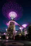Supertreedungen på trädgårdar vid fjärden, Singapore Arkivfoto