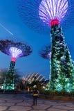 Supertreedungen på trädgårdar vid fjärden, Singapore Royaltyfria Foton