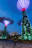 Supertreedungen på trädgårdar vid fjärden, Singapore Arkivbilder