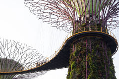 Supertrees在海湾的庭院里在南新加坡 库存图片