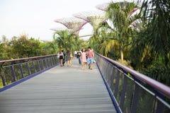 Supertrees在海湾的庭院里在南新加坡 免版税库存图片