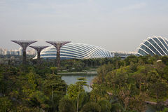 Supertrees在海湾的庭院里在南新加坡 库存照片