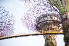 Supertrees在海湾的庭院里在南新加坡 免版税图库摄影