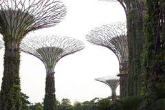 Supertrees在海湾的庭院里在南新加坡 免版税库存照片