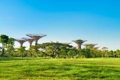 Supertrees在滨海湾公园公园,新加坡 免版税库存图片