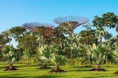 Supertrees在滨海湾公园公园,新加坡 图库摄影