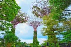 Supertrees с голубым небом стоковая фотография