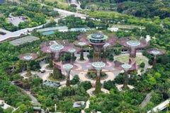 Supertrees aux jardins par la baie à Singapour Photo libre de droits