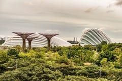 Supertrees, bosque de Supertree em jardins pela baía em Singapura fotografia de stock