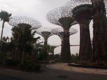 SuperTrees in den Gärten durch die Bucht, Singapur stockfotos
