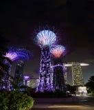 Supertrees dunge, Singapore Arkivfoton