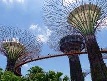 Supertrees e Skyway em jardins pela ba?a em Singaopre fotos de stock