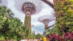 Supertrees em jardins pelo hyperlapse do timelapse da baía filme