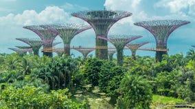 Supertrees em jardins pelo timelapse da baía video estoque