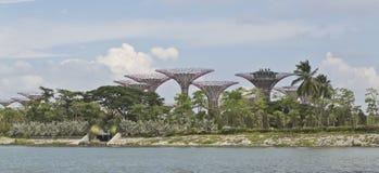Supertrees en jardines por la bahía Imagen de archivo