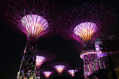Garden by The Bay Supertrees Royalty Free Stock Photos