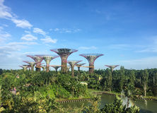 Supertrees at the Garden by the Bay in Singapore Stock Photography