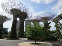 Supertrees at Garden by the Bay Stock Image