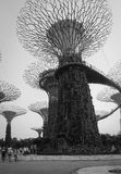 Supertrees at the Garden Bays in Singapore Royalty Free Stock Photos