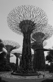 Supertrees at the Garden Bays in Singapore Stock Photo