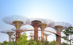 Supertrees, Gardens by the Bay Stock Image