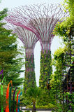 Supertrees, Gardens by the Bay Stock Photos