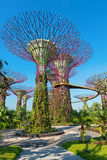 Supertrees at Gardens by the Bay park, SIngapore Stock Photo