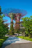 Supertrees at Gardens by the Bay park, SIngapore Royalty Free Stock Photos