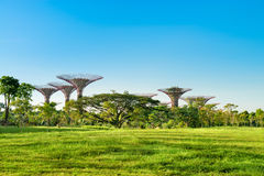 Supertrees in the Gardens by the Bay park, Singapore Royalty Free Stock Image